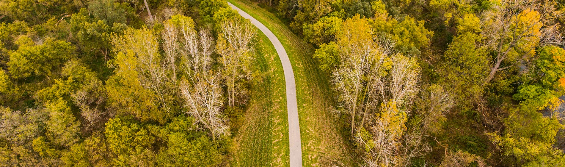 aerial view or trees and trail